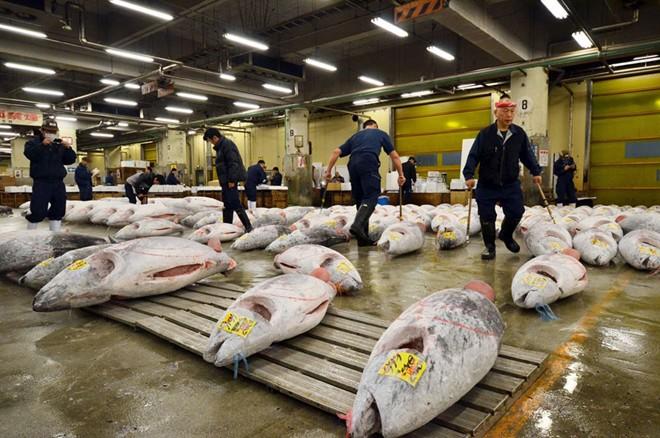 Khám phá chợ cá ngừ triệu đô ở Nhật Bản