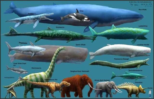 Siêu cá mập Megalodon là sát thủ hùng mạnh nhất từ trước tới nay.