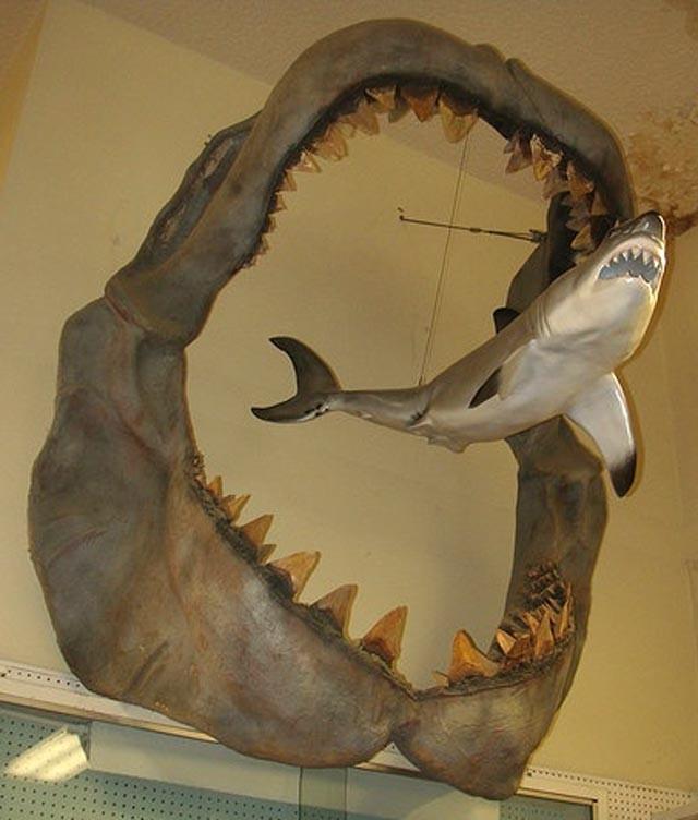 Lực cắn của Megalodon gấp 5 lần khủng long bạo chúa T-rex.