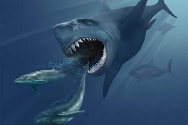 Megalodon đi săn các con mồi còn sống và giết chết cá voi lớn nhờ cú đớp vào đuôi cũng như vây