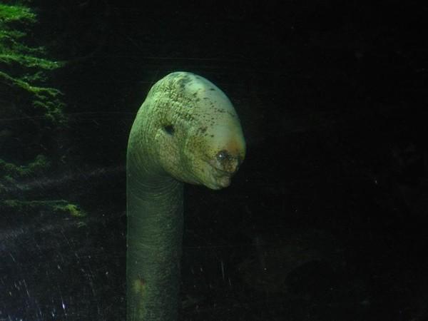 """5 loài """"quái vật"""" kỳ lạ đến khó tin ở dưới đáy biển"""