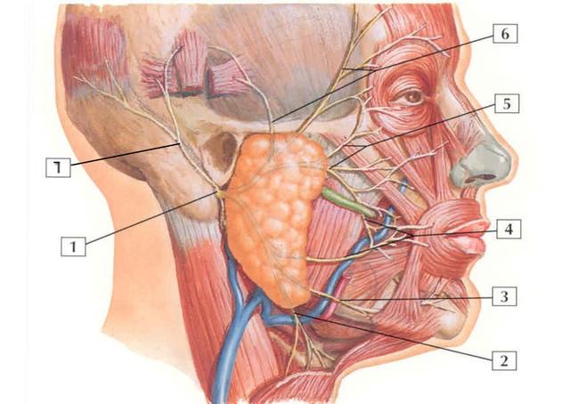 Triệu chứng của ung thư tuyến nước bọt