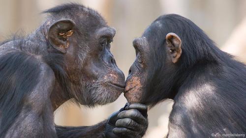 Các nhà khoa học lý giải bí ẩn nụ hôn