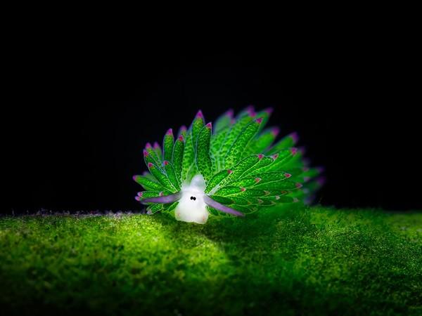 """Ngỡ ngàng trước vẻ đẹp """"không tưởng"""" của loài sinh vật lạ ẩn mình dưới biển"""