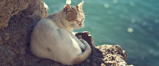 Kinh ngạc với khả năng uống nước biển thoải mái mà không chết của mèo