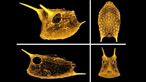 Mỹ nghiên cứu áo chống đạn từ cá nắp hòm