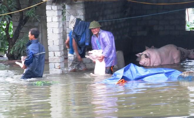 Thành phố Uông Bí ngập lũ do mưa lũ