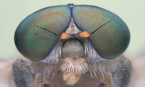 Máy bay không người lái lấy cảm hứng từ mắt côn trùng