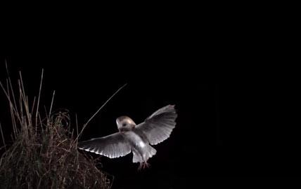 Cảnh quay chậm đẹp mắt khi loài chim cất cánh