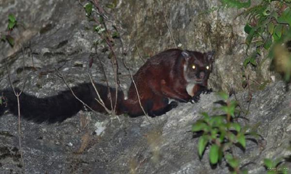 9 loài động vật quý hiếm ở xứ sở các vị thần