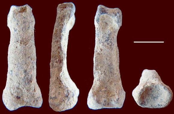 Phát hiện hóa thạch xương ngón tay loài người có niên đại 1,84 triệu năm