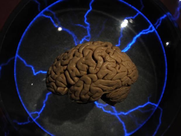 Tạo thành công não người nhân tạo giống 99% não thật