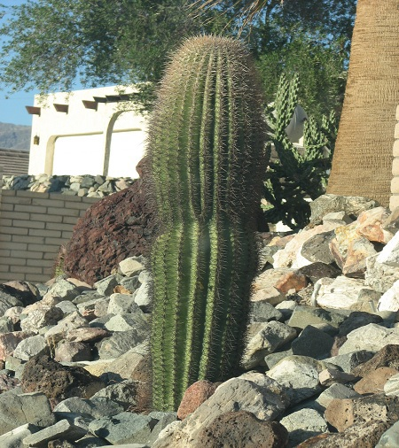"""Những """"gã khổng lồ"""" trên sa mạc"""
