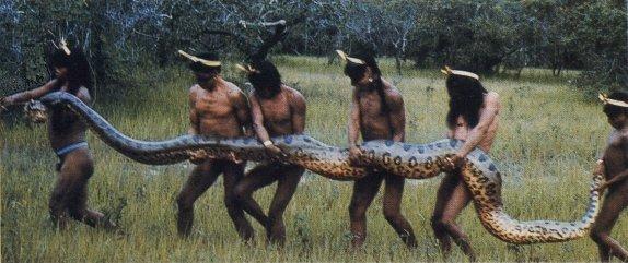 Những loài trăn sinh ra đã được quyết định thành quái vật khổng lồ