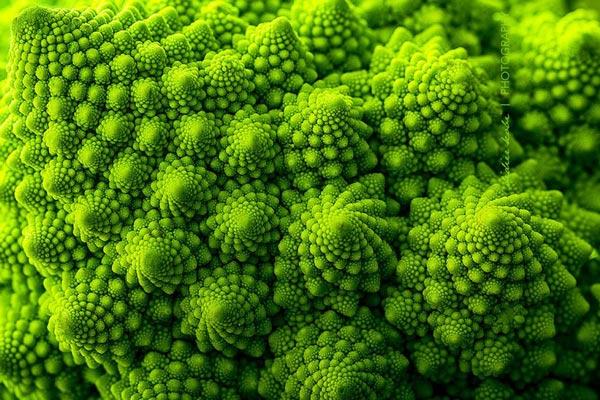 20 loài cây với hoa văn hình học kì ảo làm bạn mê mẩn