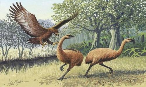 Phát hiện móng vuốt 3.300 năm của loài chim tiền sử không cánh
