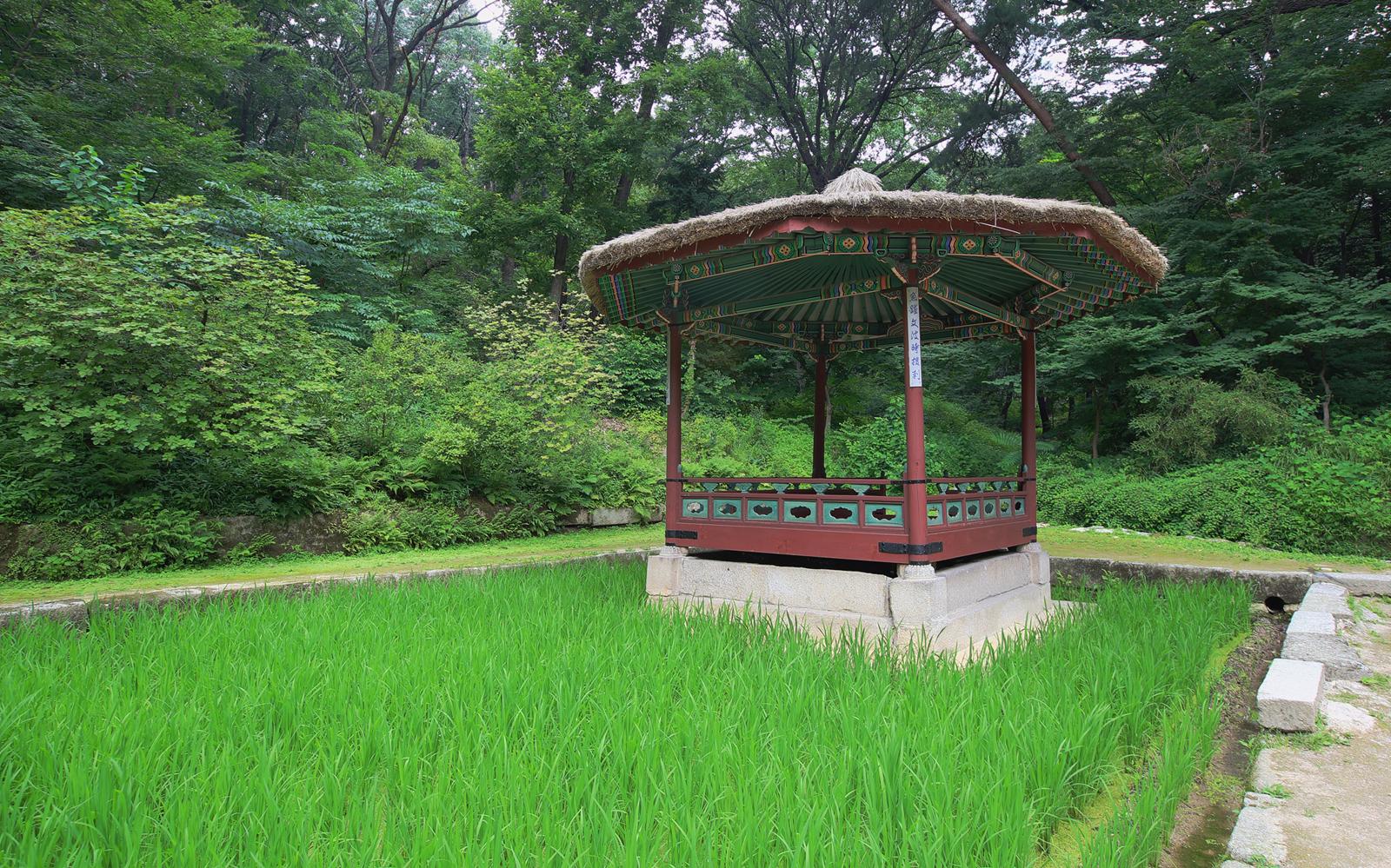 Khám phá khu vườn Biwon thuộc cung Changdeokgung ở Hàn Quốc