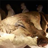 Nhân bản vô tính động vật từ thời tiền sử để tạo ra công viên Kỉ Jura