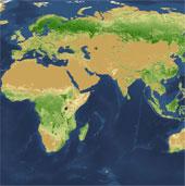 Tìm ra thủ phạm triệt hạ phân nửa cây xanh trên Trái Đất