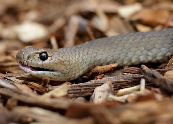 Đừng để bị rắn độc cắn vì thế giới đã hết thuốc chữa