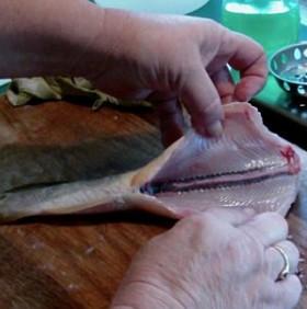 Lý giải vì sao cá mất đầu mà vẫn giãy đành đạch