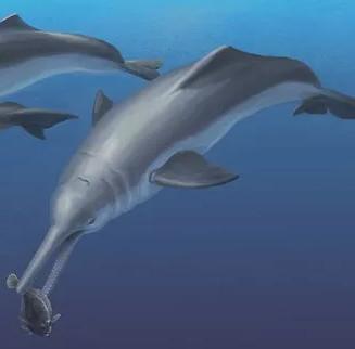 Hé lộ tổ tiên mới của loài cá heo hiện đại