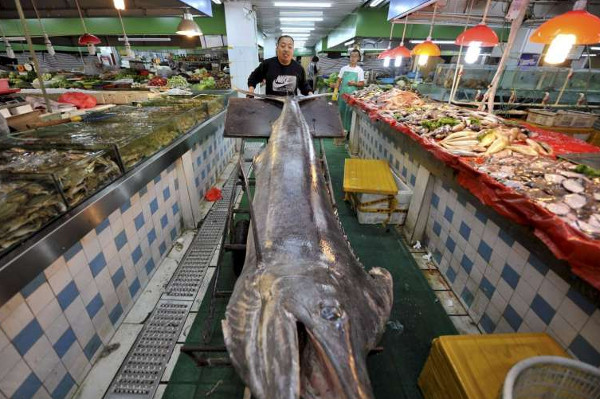 Cá kiếm dài hơn 4 mét lọt lưới ngư dân Trung Quốc