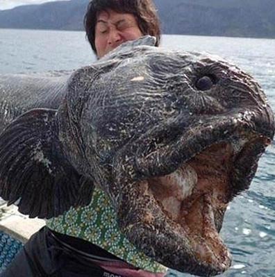 """Phát hiện """"thủy quái"""" đột biến ở biển Fukushima"""