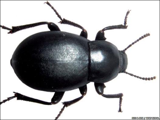 Những chuyện thú vị về côn trùng