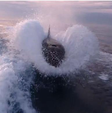 """Video: Xem cá voi """"sát thủ"""" truy đuổi sát nút tàu lạ"""
