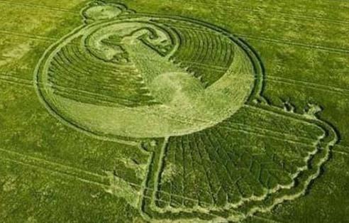 Một vòng tròn bí ẩn trên đồng lúa mạch bất ngờ xuất hiện chỉ sau một đêm.