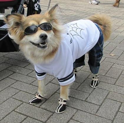 Nhật đối phó nạn chó đi bậy bằng bản đồ trực tuyến