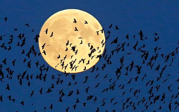 """Ngắm """"siêu trăng"""" tuyệt đẹp trên khắp thế giới"""