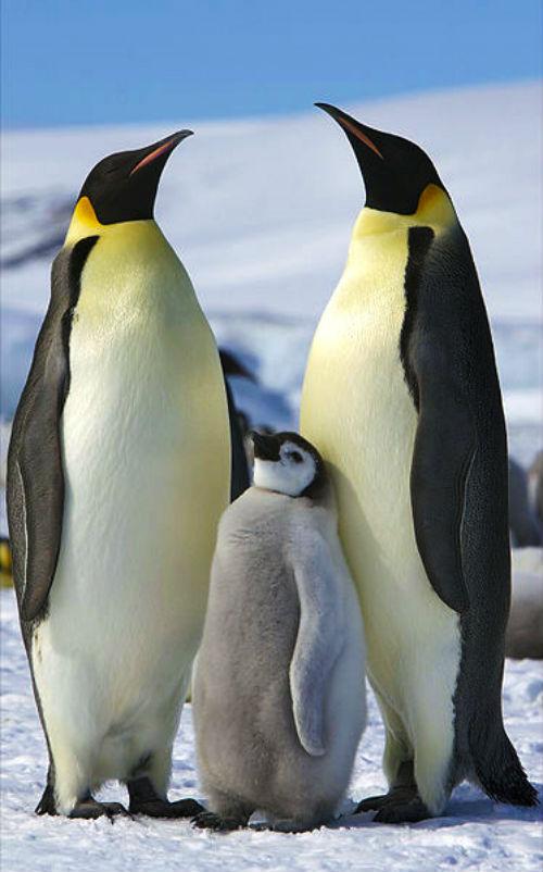 10 điều thú vị về hai vùng cực