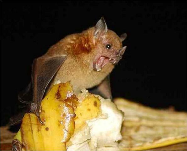 Kỳ lạ những loài động vật tí hon nhất thế giới