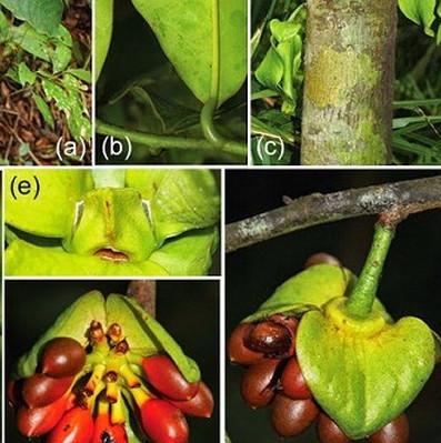 Khánh Hòa phát hiện nhiều loài thực vật mới tại khu Hòn Bà