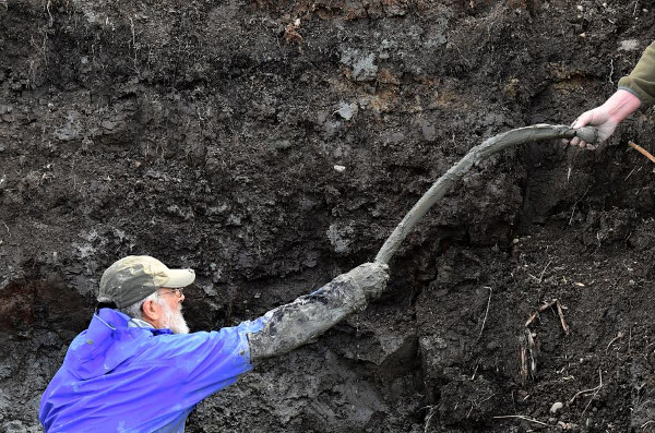 Phát hiện xương voi ma mút lông xoăn tại cánh đồng đậu nành