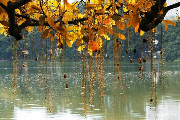 Khám phá mùa thu