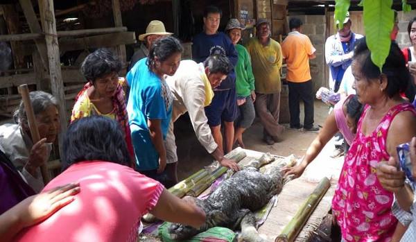 Quái vật đầu cá sấu mình trâu gây xôn xao ở Thái Lan