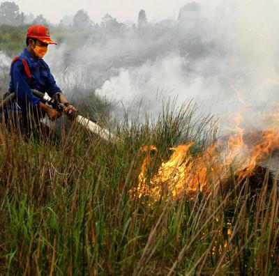 Indonesia nhờ Nga, Nhật giúp khống chế cháy gây mù khô