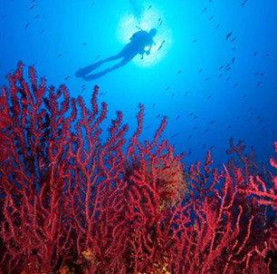 Nước biển nóng bí ẩn khiến san hô trắng trên toàn cầu