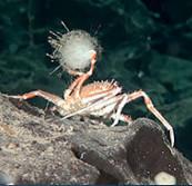10 sinh vật biển kỳ lạ tại khu bảo tồn biển Chile