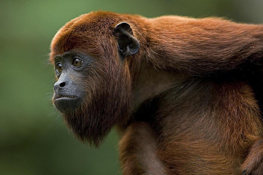 Khám phá thú vị về cái cổ loài vật