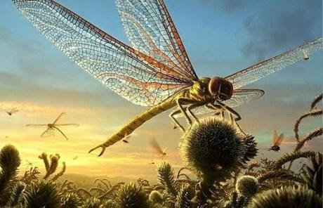 Thú vị thế giới côn trùng