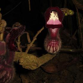 Phát hiện 3 loài thực vật mới ở Việt Nam