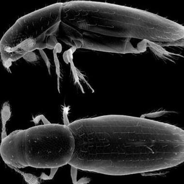 Con bọ bé nhất thế giới trông như thế nào?