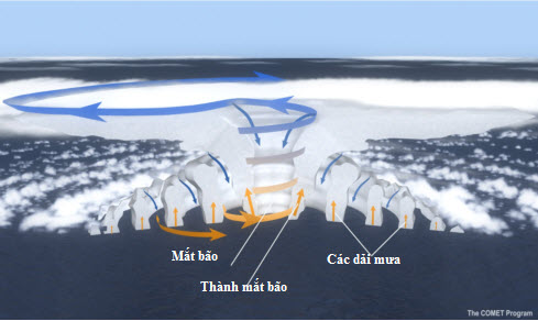 Sơ đồ cấu trúc bão với các thành phần cơ bản: mắt bão, thành mắt bão và các dải mưa xoắn