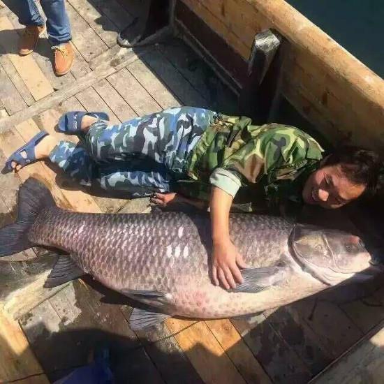 Cá trắm đen 90kg mắc lưới ở Trung Quốc