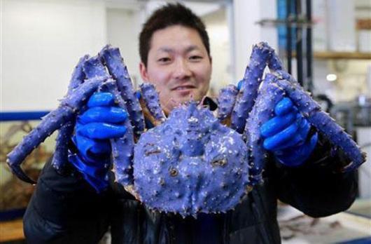Những con cua biển khổng lồ mắc lưới ngư dân