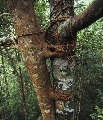 10 loài cây lạ trên thế giới